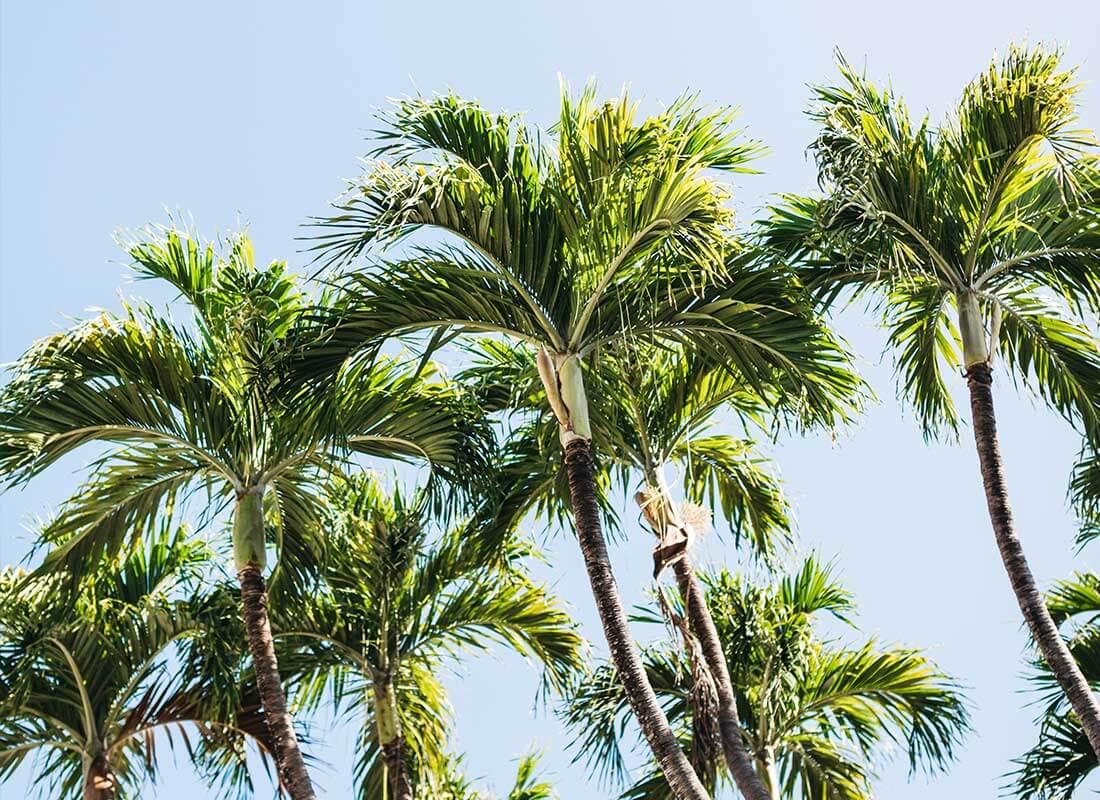 Arden Palm Beach